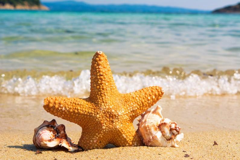 Star on the beach1 00110