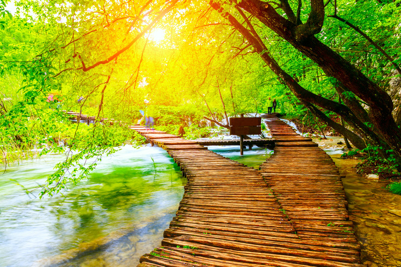 Summer forest path Plitvice lakes-Croatia 00492