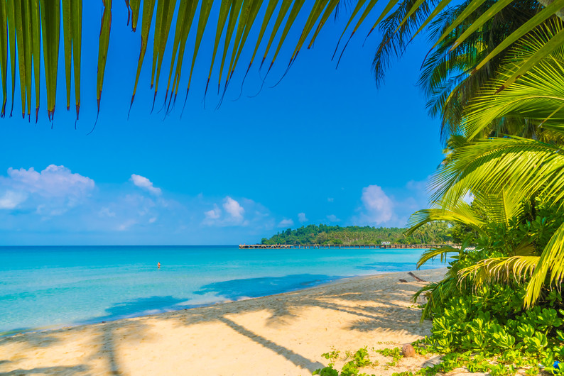 Tropical beach with coconut palm 00454