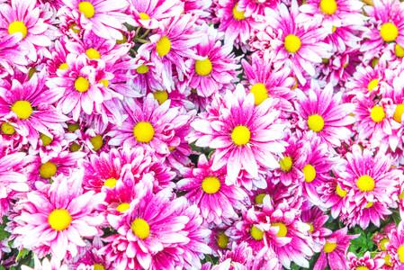 Цветы 01405