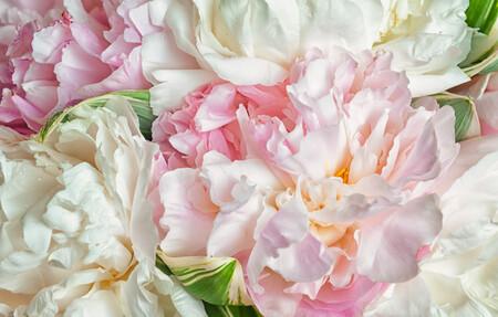 Цветы 01414