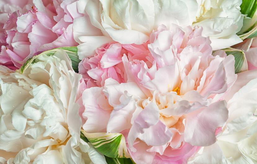 Цветы 01474