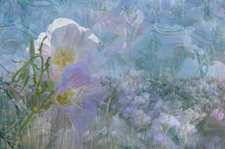 цветы 01512