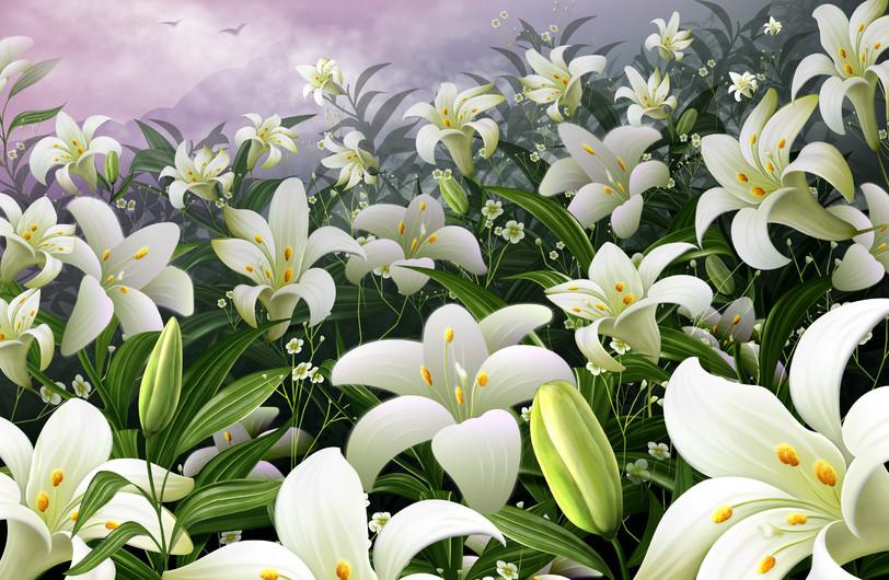 цветы магнолии 01057