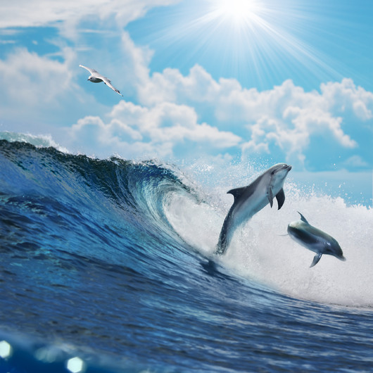 Two Dolphin surfing 00927