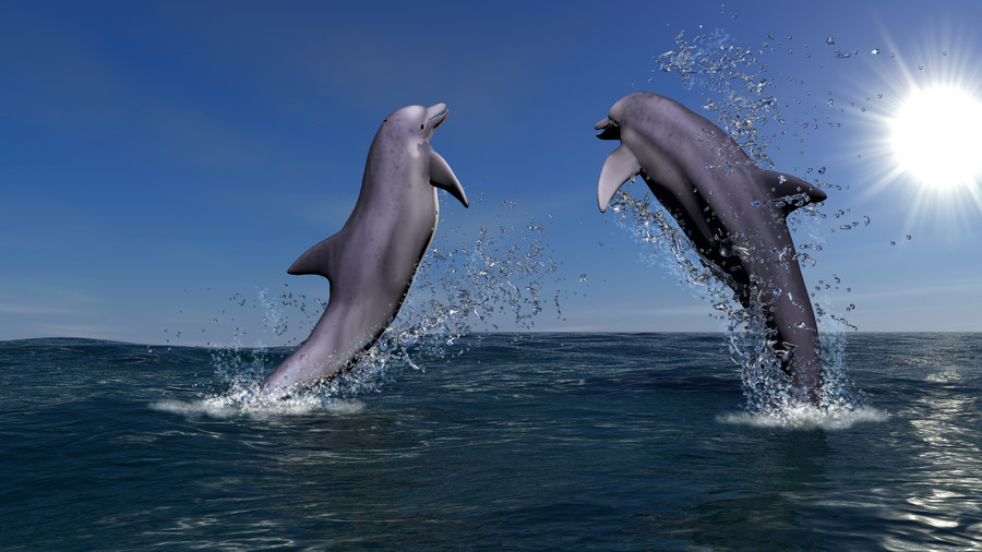 Two dolphins 00961