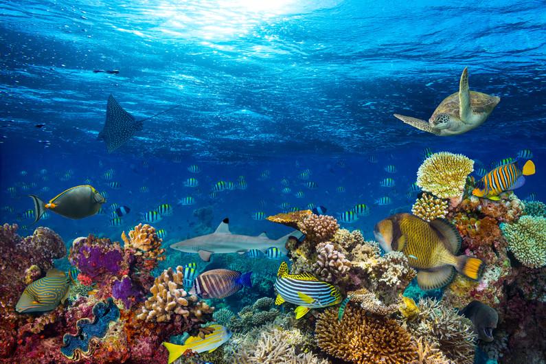 Underwater coral reef 00729